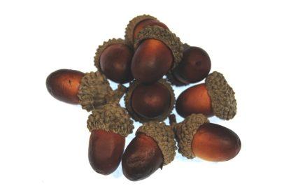 orange and brown artificial acorns celloexpress